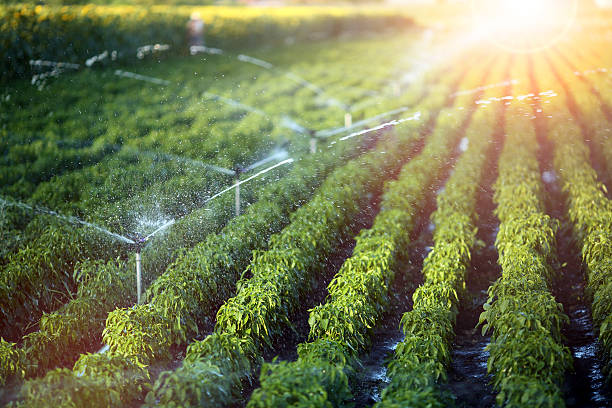 Irrigation system in function Irrigation system in function watering agriculutural plants irrigation equipment stock pictures, royalty-free photos & images