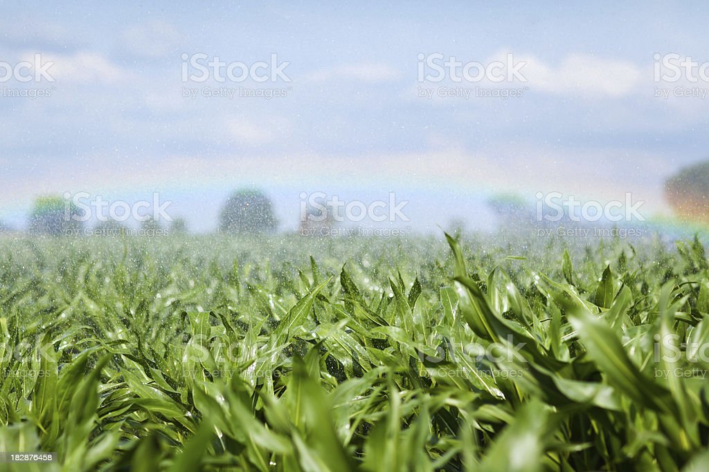 Irrigation System on a Corn Field royalty-free stock photo