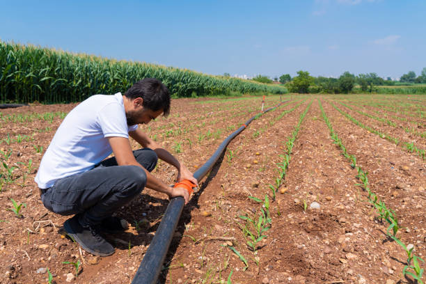 Irrigation system. Water saving irrigation system being used in a young corn field. Worker connects irrigation system pipes. Agricultural background stock photo