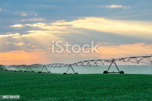 Agricultural sprinkler watering agricultural fields of soybean in summer.
