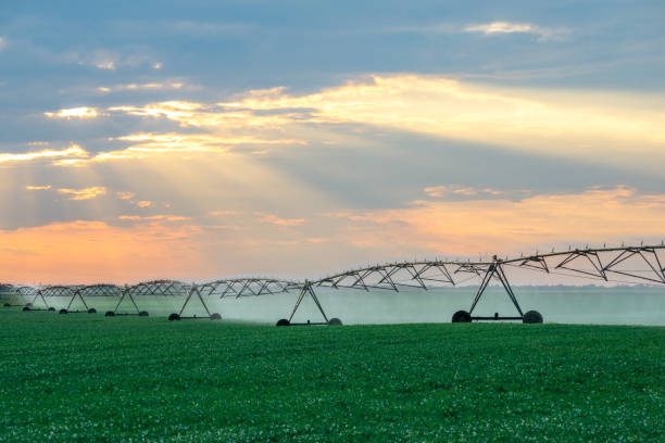 Irrigation system watering agricultural fields Agricultural sprinkler watering agricultural fields of soybean in summer. irrigation equipment stock pictures, royalty-free photos & images