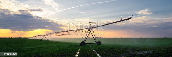 Irrigation system watering soybean field at summer sunset.