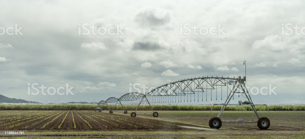 A center-pivot irrigation system watering a crop of growing sugar...