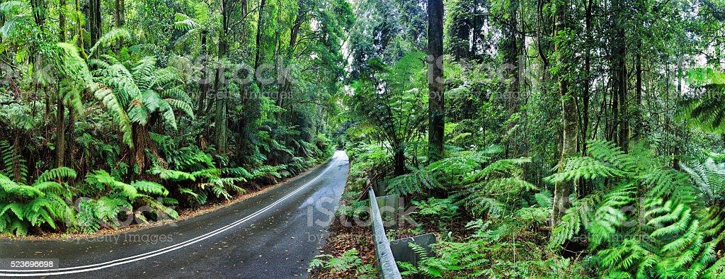 BM Irvine rainforest road stock photo
