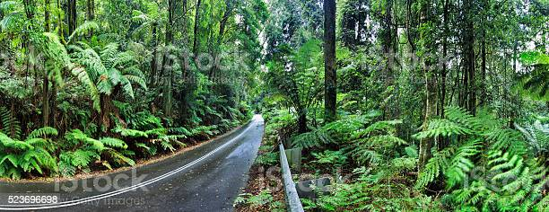 Photo of BM Irvine rainforest road