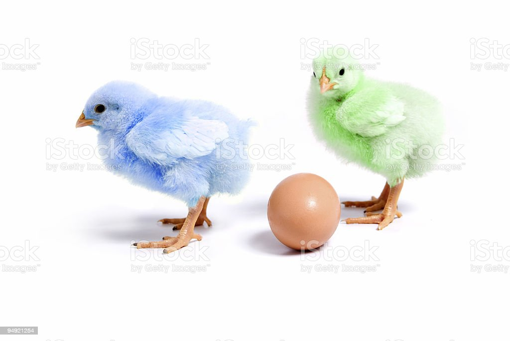 Is this your egg!? stock photo