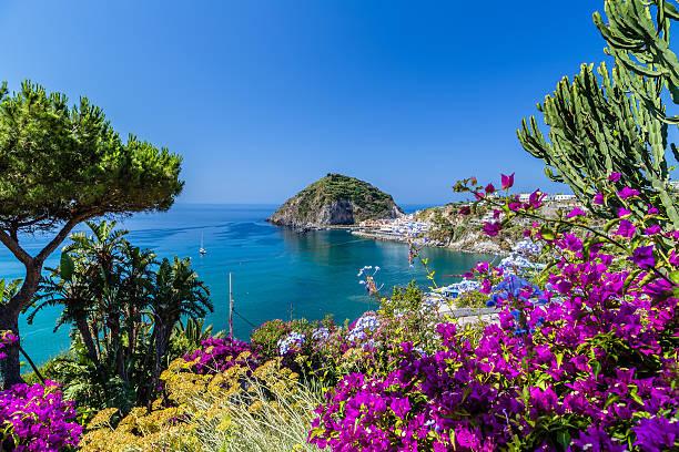 ischia and bougainvillea glabra - golf sommar skugga bildbanksfoton och bilder