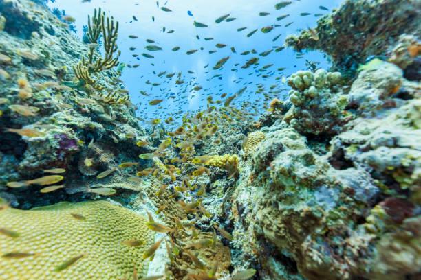 Ishigaki Island Diving - Horde von Jungfischen – Foto