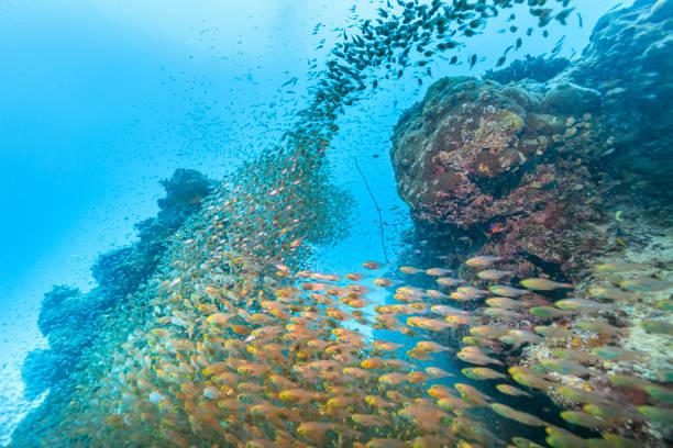 Ishigaki Island Diving - Horde junger Fische – Foto