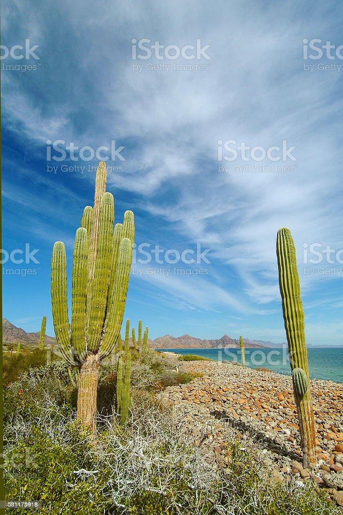 Isla Carmen desert stock photo