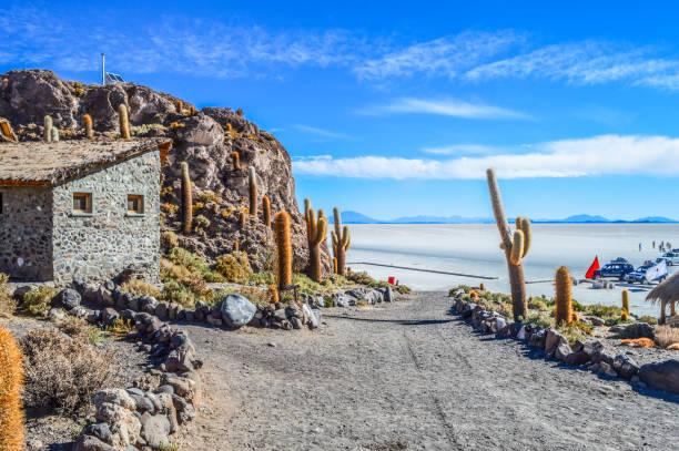 在烏尤尼 bovilia 在 isla del pescado - 阿爾蒂普拉諾山脈 個照片及圖片檔