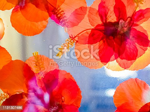 Flower stickers on a window in a resort on Kauai