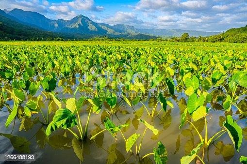 istock Island of Kauai in Hawaii 1266488193