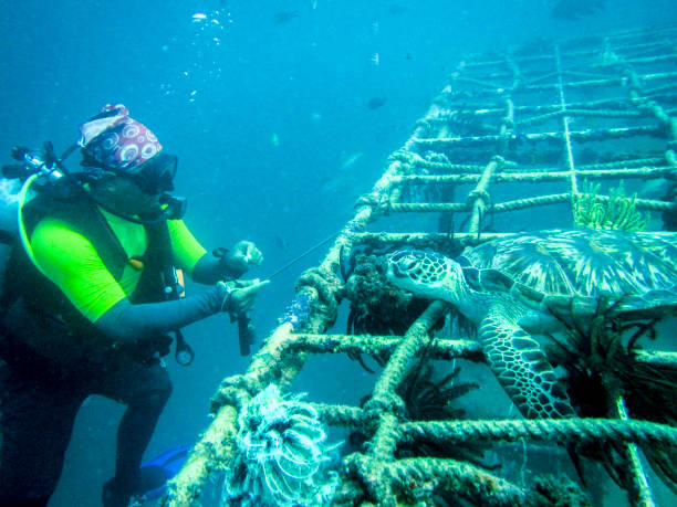 island of sipadan - artificial reef stock pictures, royalty-free photos & images