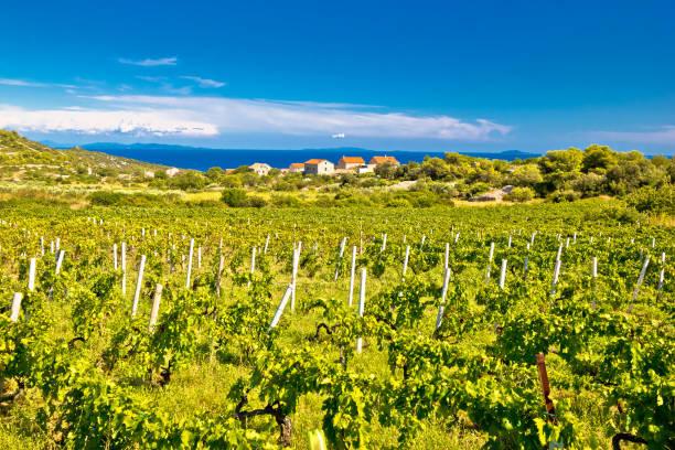 Island of Vis vineyards panorama, Dalmatia, Croatia Island of Vis vineyards panorama, Dalmatia, Croatia croatian culture stock pictures, royalty-free photos & images