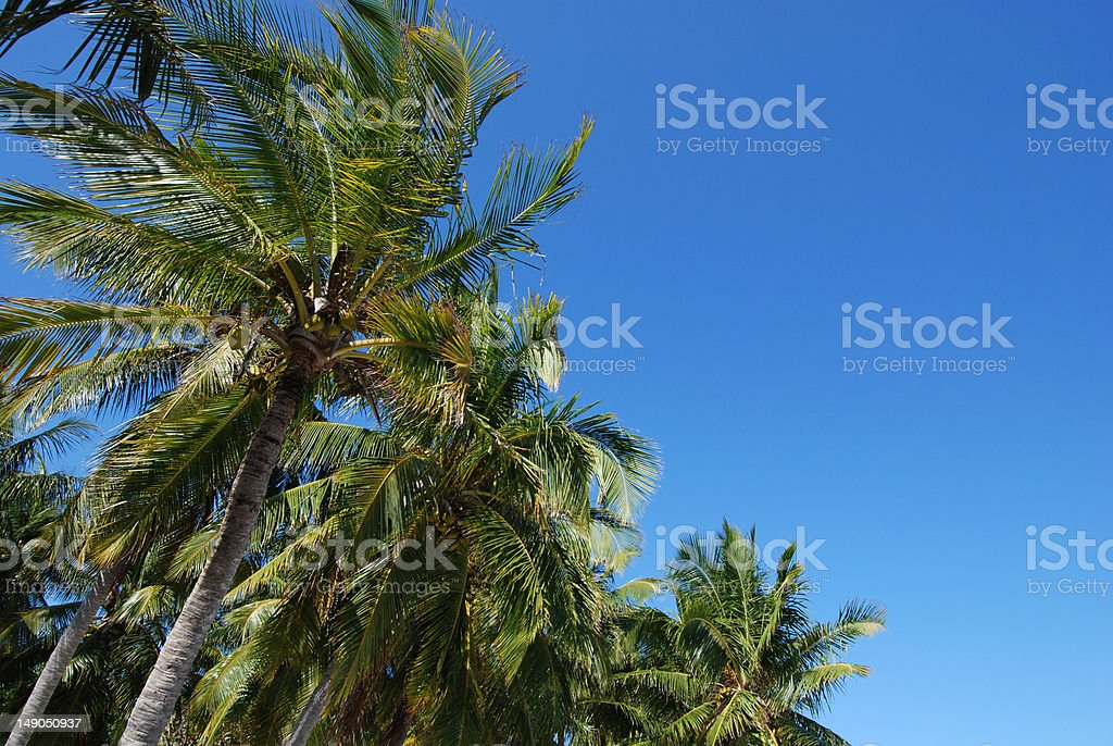 Island palm trees against a blue sky stock photo