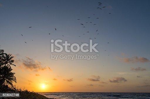 Flock of magnificent frigate birds and a Caribbean island sunset. Half Moon Caye, Belize Caribbean.