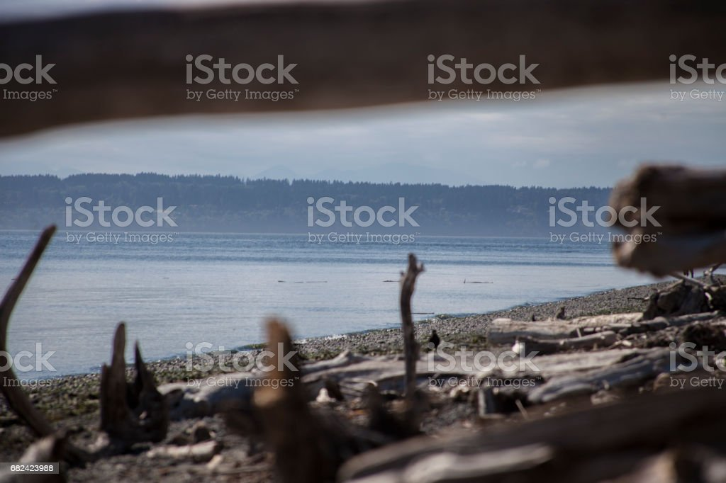 Island Through Driftwood royalty-free stock photo