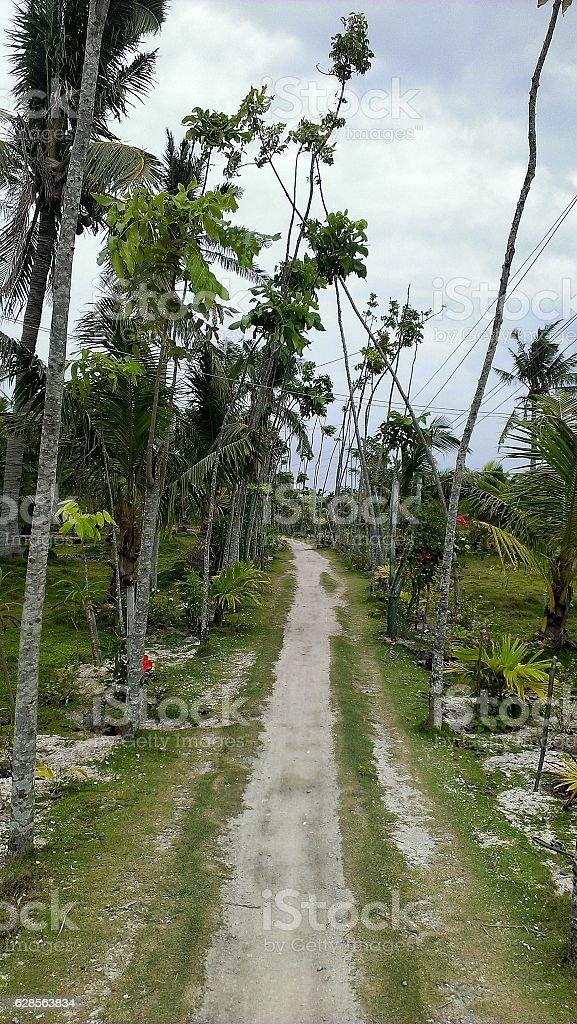 Island Trail stock photo