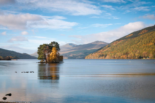 Isle of Spar Trees on the Isle of Spar in Loch Tay, Scotland. lake waterfowl stock pictures, royalty-free photos & images