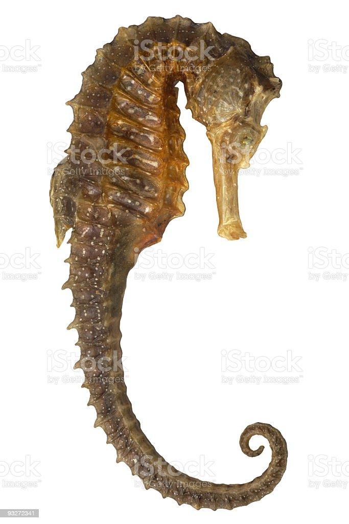 Iso Seahorse royalty-free stock photo