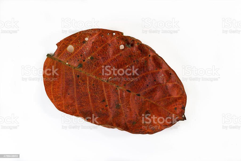 isolaed orange dry leaf on white background stock photo
