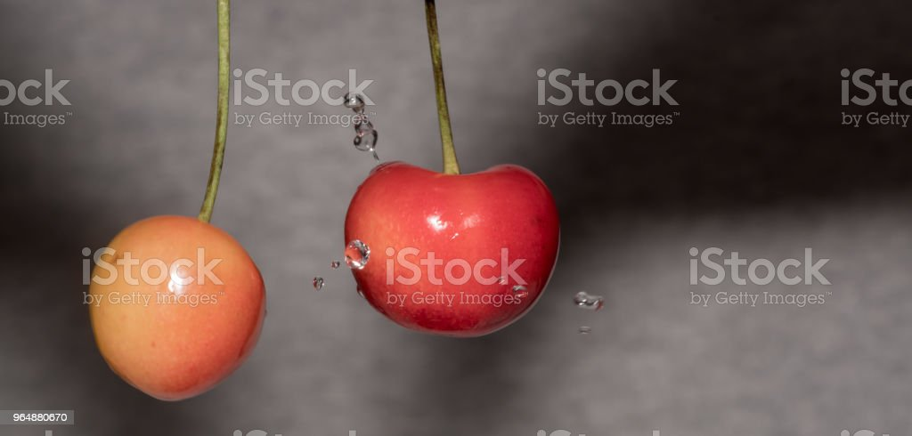 Isolate macro of red cherry with water royalty-free stock photo