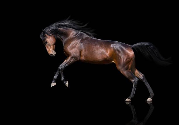 Isoler de brun cheval sautant sur fond noir - Photo