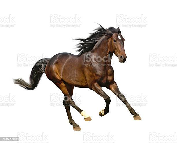 Isolate of the brown horse picture id508757098?b=1&k=6&m=508757098&s=612x612&h=xikgbf9foe1jfwgr 7 prt4 wzksuls7tq0bzhs9kqa=