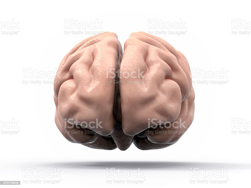 Isolated 3d Brain Illustration Stock Photo & More Pictures of ...