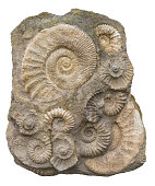 isolated rock formation including lots of ammonite fossils