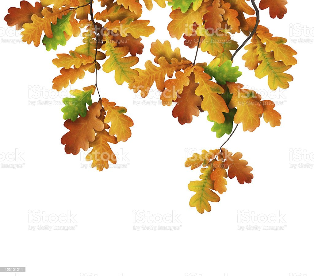 Isolated Autumn Foliage royalty-free stock photo