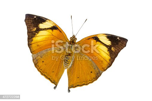 istock Isolated Autumn Leaf butterfly (Doleschallia bisaltide) 472722258