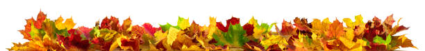 Isolated autumn leaves banner stock photo