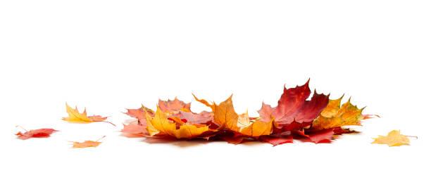 isolé des feuilles de l'automne - couleur des végétaux photos et images de collection