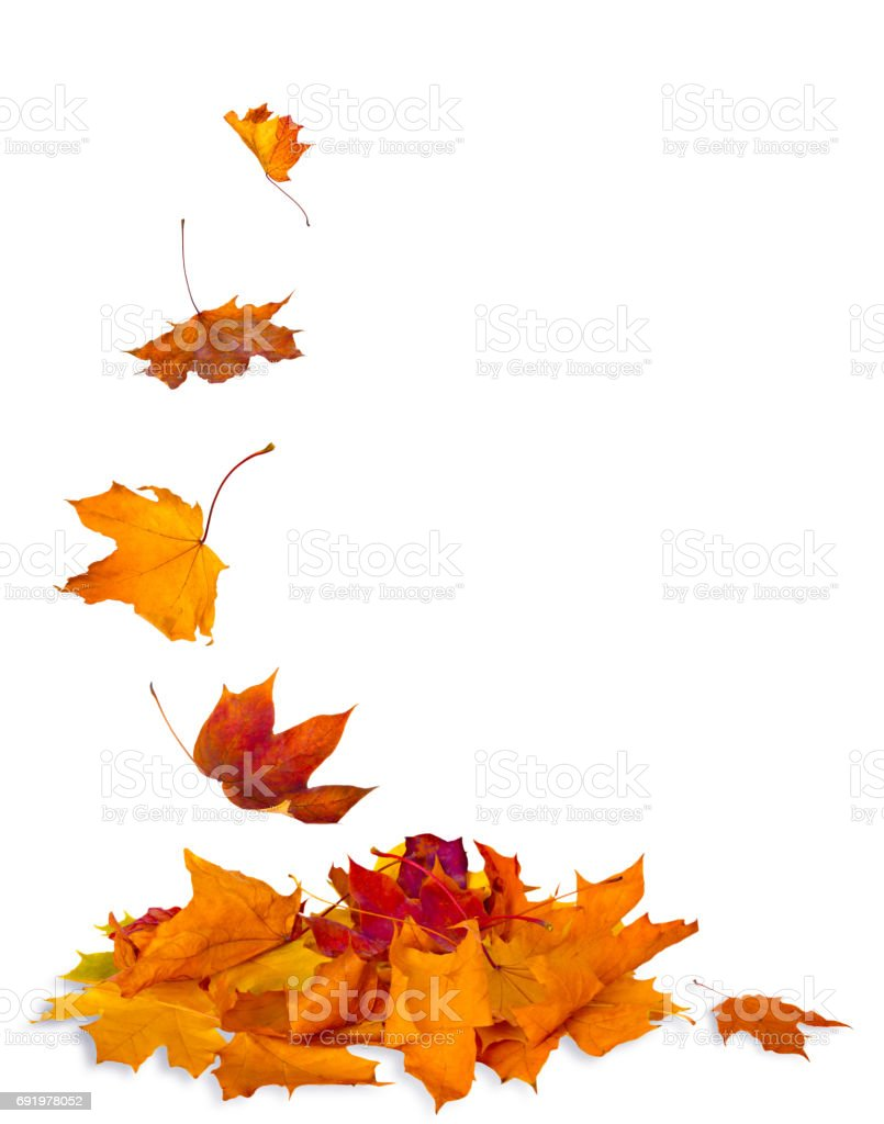 Isolated autumn leaves - foto stock