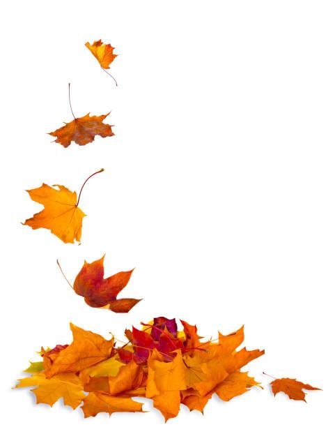 Isolado folhas de outono - foto de acervo
