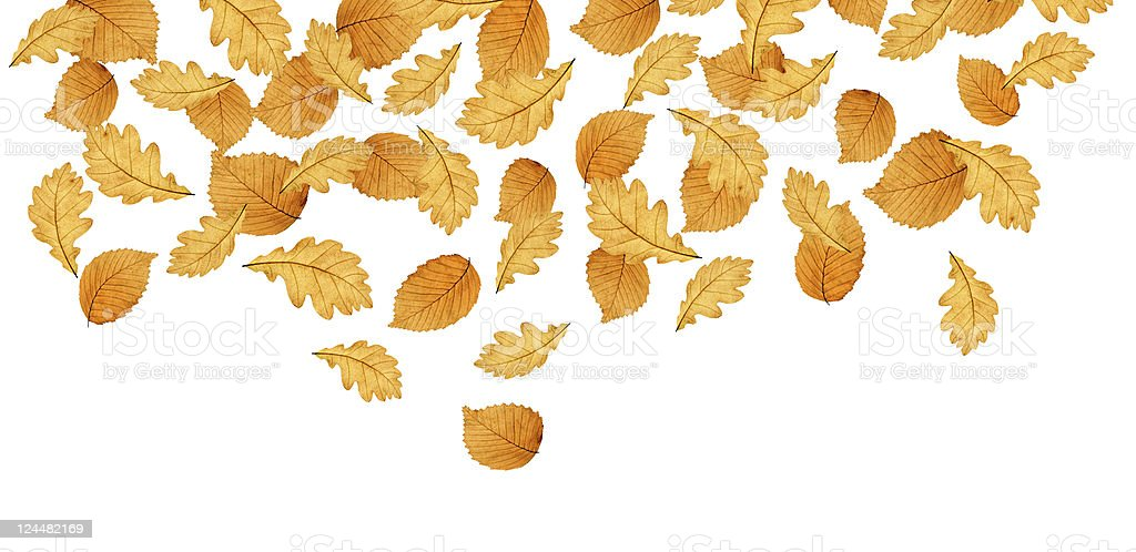 Isolated Autumn Leaves XXL royalty-free stock photo