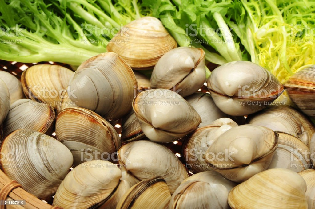 Isolated background of clams stock photo