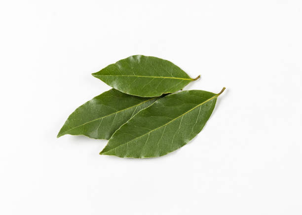isolated bay leaf. laurel  leaves on a white background. bayleaf. - alloro foto e immagini stock