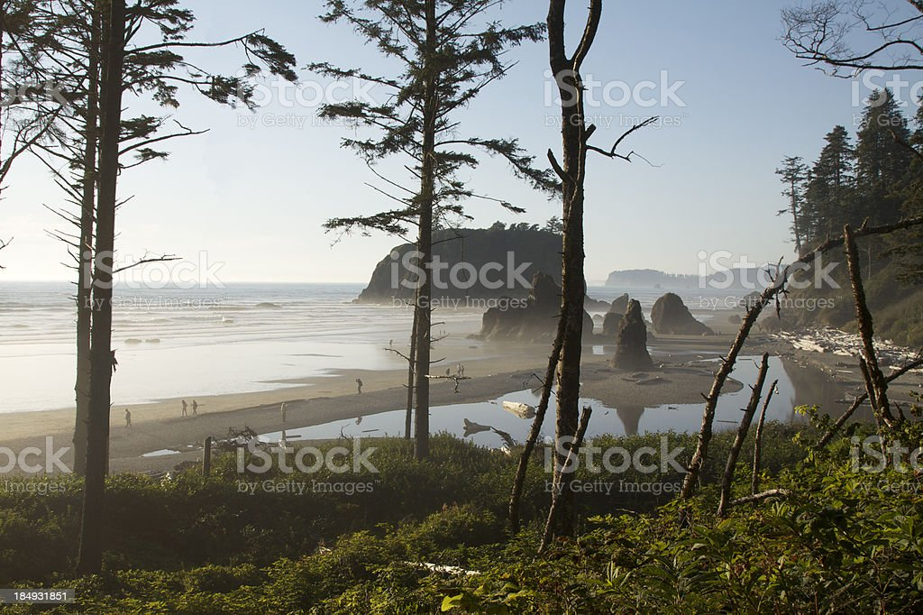 Isolated Beach In Olympic National Park stock photo