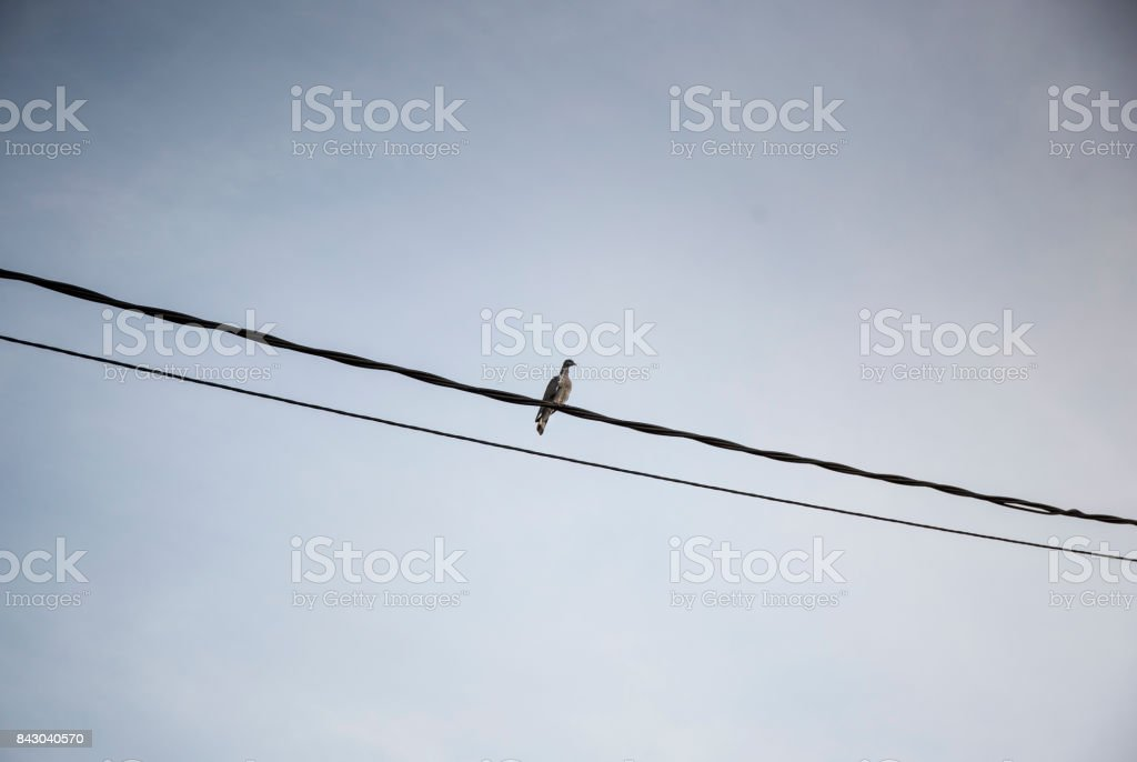isolated bird in the wire stock photo