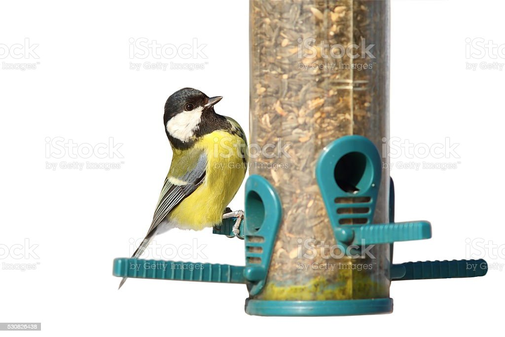 isolated bird on feeder stock photo