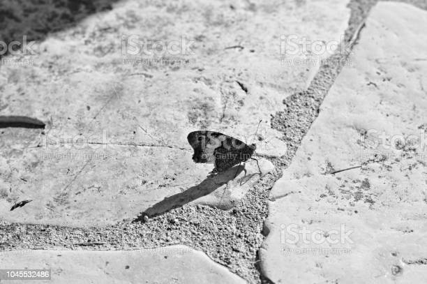 Isolated black and white butterfly on the ground picture id1045532486?b=1&k=6&m=1045532486&s=612x612&h=wos gtf6c3idhg5hsbrmu6n3ulgrg7krs9tnprawrsq=