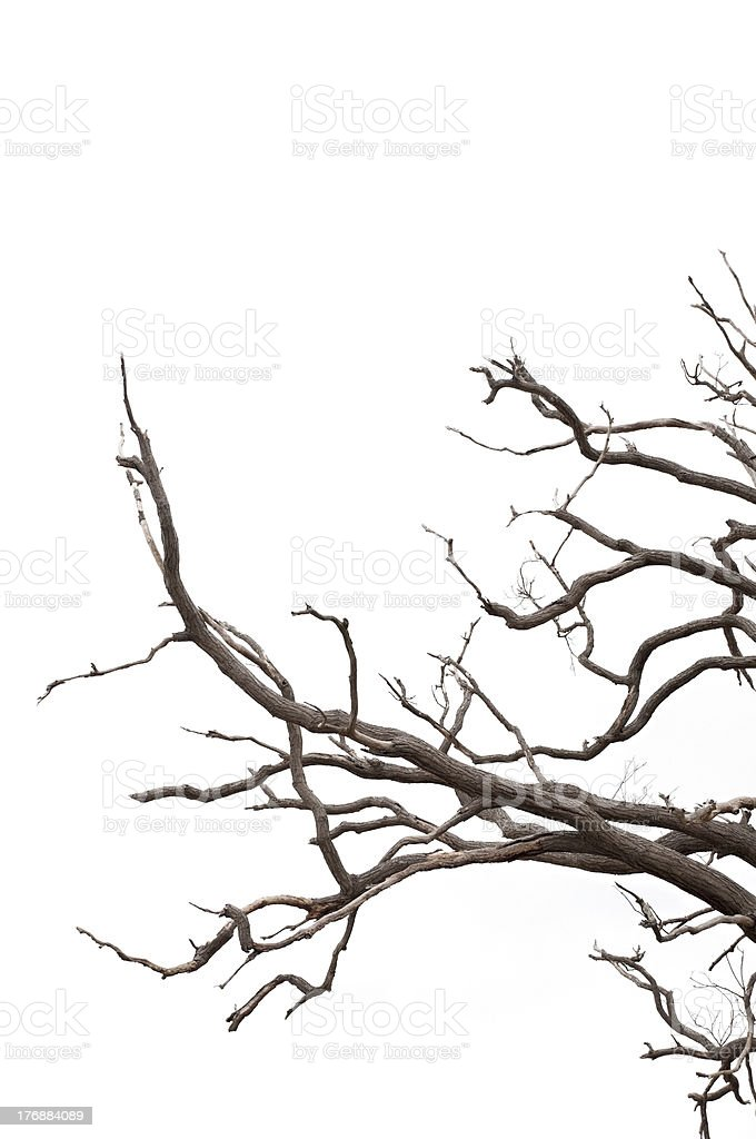 Isolated Branches royalty-free stock photo