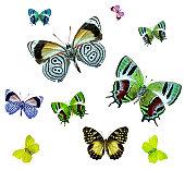 istock Isolated butterflies. 157180306