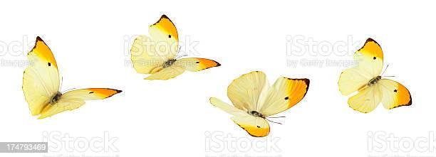 Isolated butterflies picture id174793469?b=1&k=6&m=174793469&s=612x612&h=fwkgkcn0vquvaq11uhathjnifgyv9ye2qqxtwn wero=