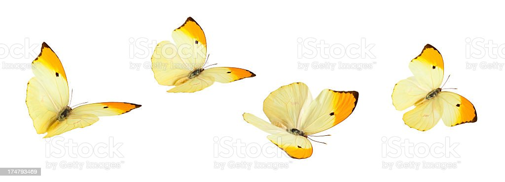 Isolated Butterflies. stock photo