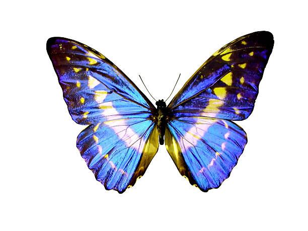 Mariposa aislado - foto de stock