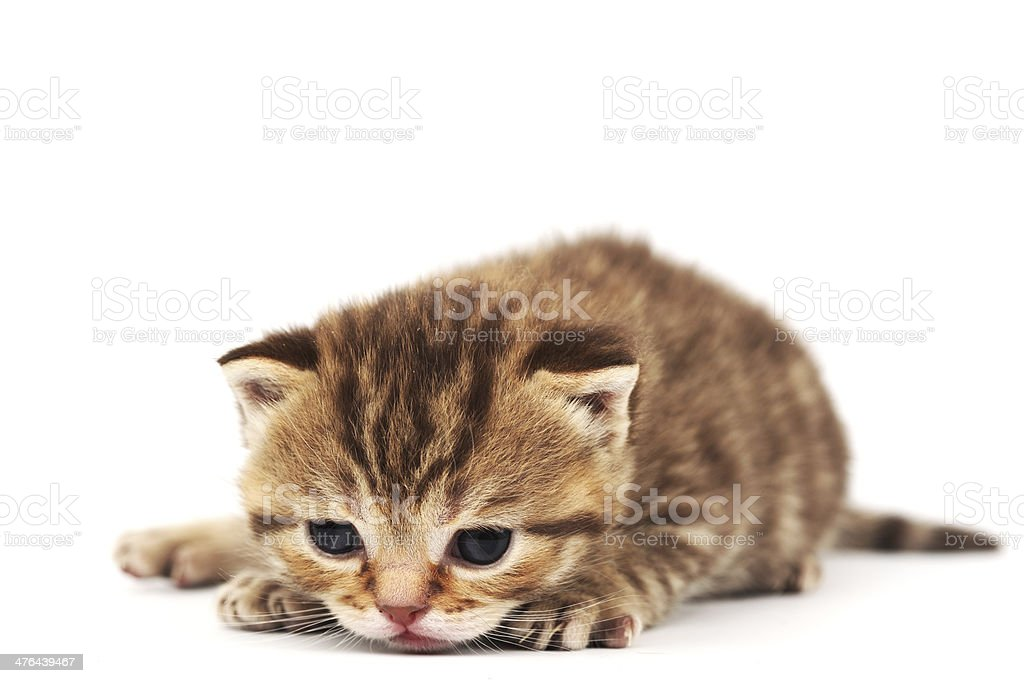 isolated cat royalty-free stock photo